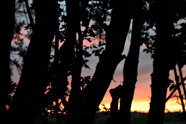 sunset-behind